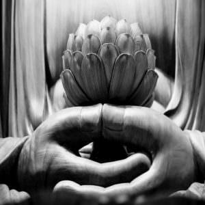 Lotus-743